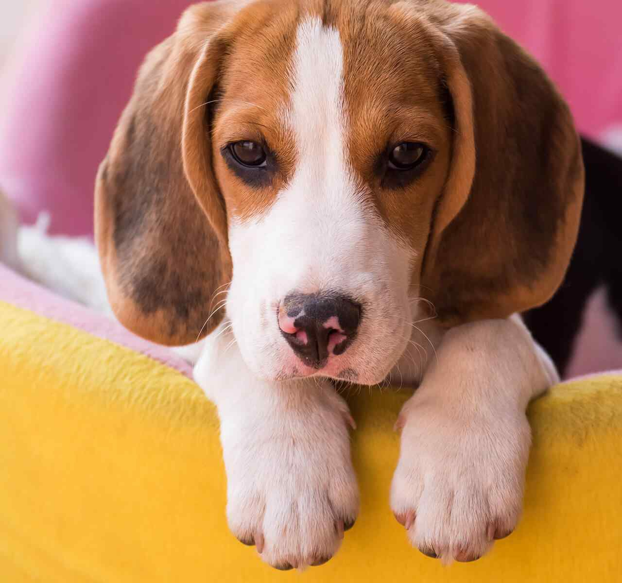 https://www.dogfitness.it/wp-content/uploads/2018/09/post_02-1-1280x1200.jpg