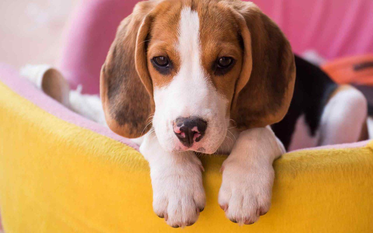 https://www.dogfitness.it/wp-content/uploads/2018/09/post_02-1-1280x800.jpg